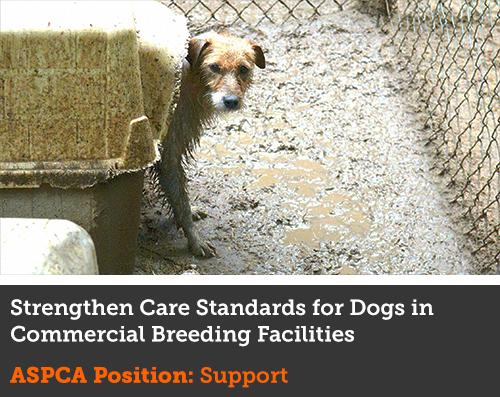 Advocacy Alert | ASPCA