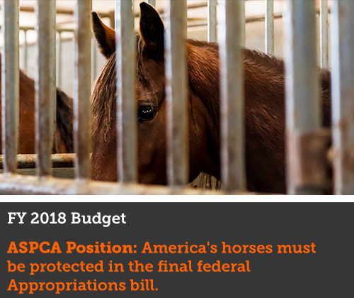 protect horses