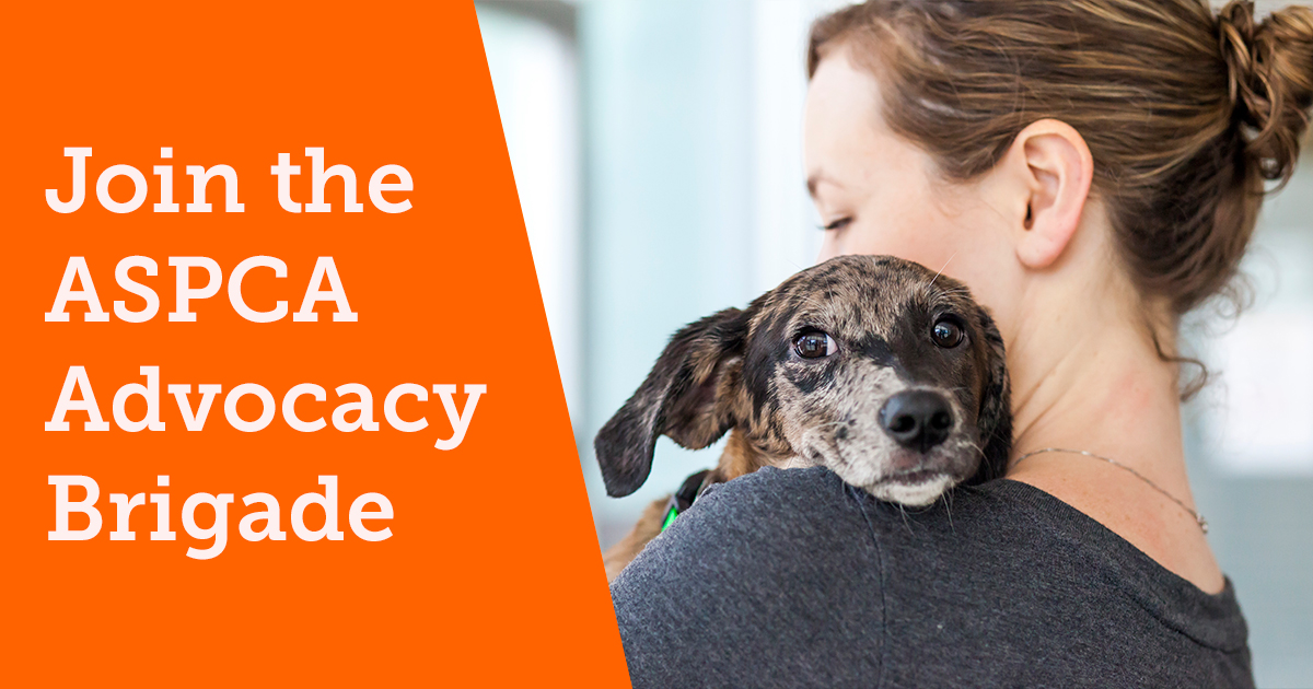 how to join the aspca