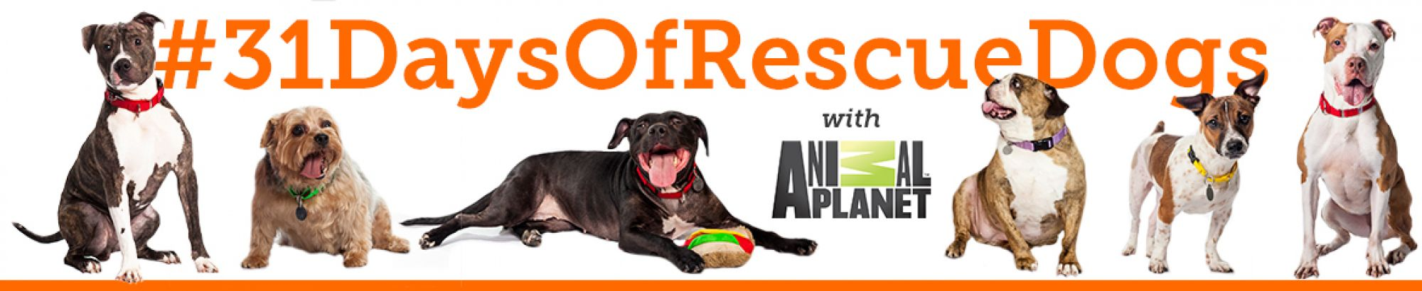 Adopt a Shelter Dog Month Campaign